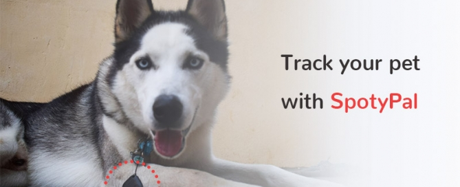 pet tracker - dog tracker